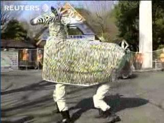 zebraontheloose-eru.jpg